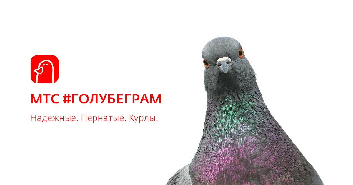 МТС Голубеграм