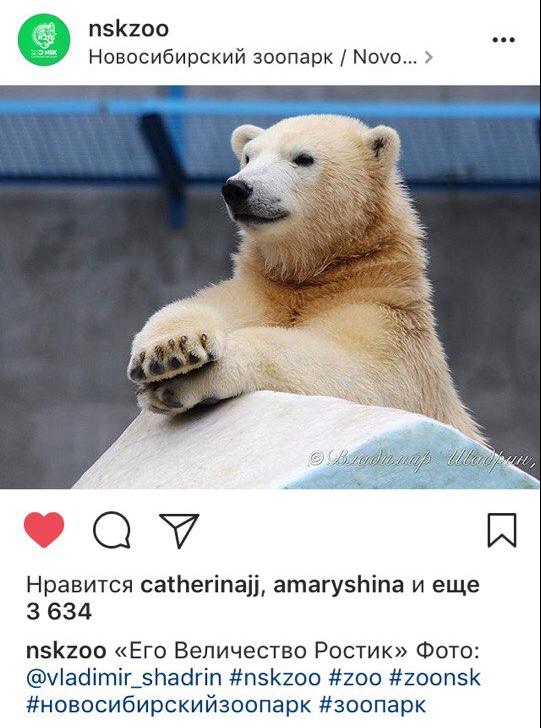Коммуникационная стратегия для Новосибирского зоопарка